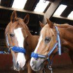 Ponymaatjesproject