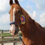 Simpley Red Paard van het jaar 2017