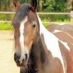 (Nederlands) Hoe maak ik mijn paard netjes voor de F Proeven: 25 april 12.30 uur