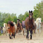 (Nederlands) Paard & gedrag: 18 april 13.30 uur – 25 april 14.00 uur